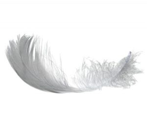 La plume physis, de légèreté et ...