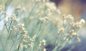 fleurs physis